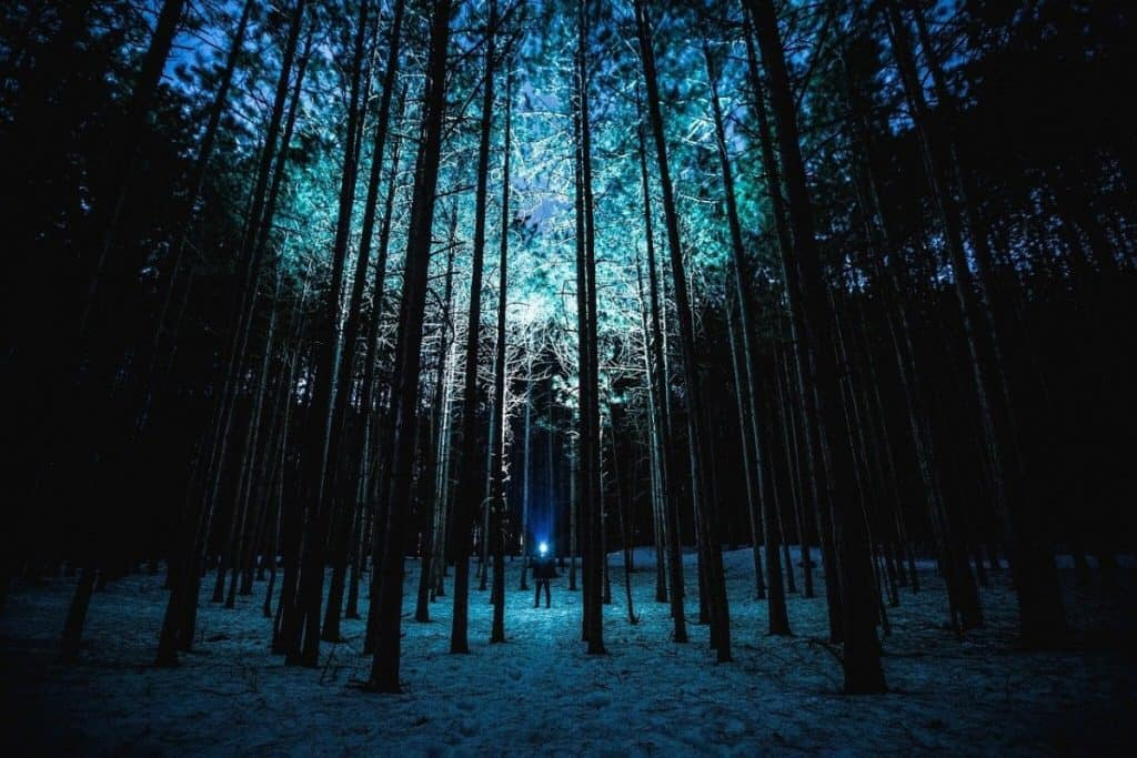 blue flashlight in woods at night